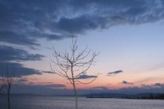Áll egy ifjú ...fa a parton